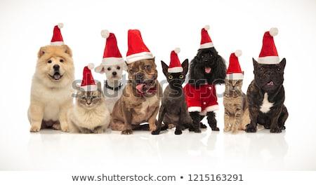 Grupo ocho adorable gatos perros Foto stock © feedough