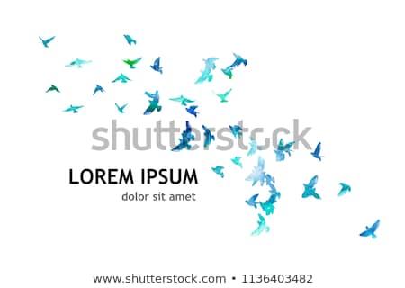 Uçan kuşlar gökyüzü vektör logo ikon Stok fotoğraf © blaskorizov