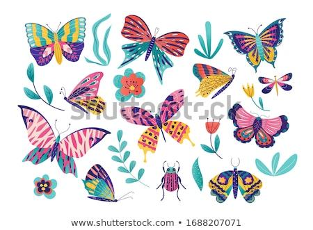 Vektör ayarlamak kelebek doğa sanat siyah Stok fotoğraf © olllikeballoon