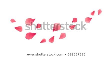 Pattern fiori petali magenta floreale garofano Foto d'archivio © artjazz