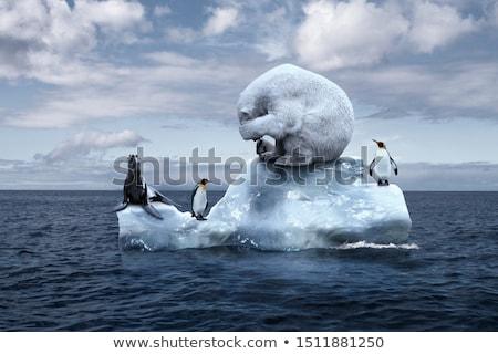Melting Iceberg And Fur Seal Stock photo © leedsn