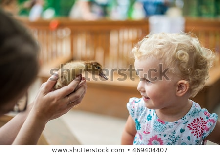 Toddler girl playing with the ducklings in the petting zoo Stock photo © galitskaya