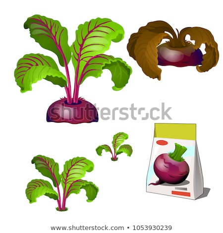 Set of stages of life of a agricultural plant beet isolated on white background. Paper packaging for Stock photo © Lady-Luck