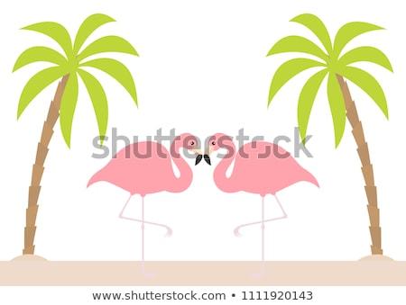 Paisagem flamingo silhueta noite ilustração animais selvagens Foto stock © barsrsind
