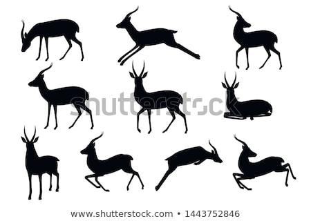 Illustration gazelle forêt coucher du soleil signe jungle Photo stock © adrenalina