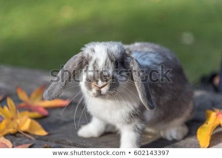 Sevimli küçük beyaz tavşan yeşil ot Paskalya Stok fotoğraf © serdarduran