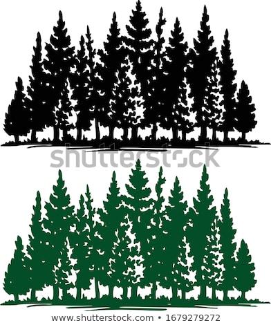 örökzöld kert dekoratív fenyőfa sekély mélységélesség Stock fotó © pashabo
