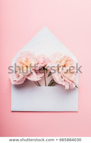 otwarte · kopercie · kwiaty · odizolowany · biały · działalności - zdjęcia stock © adamson