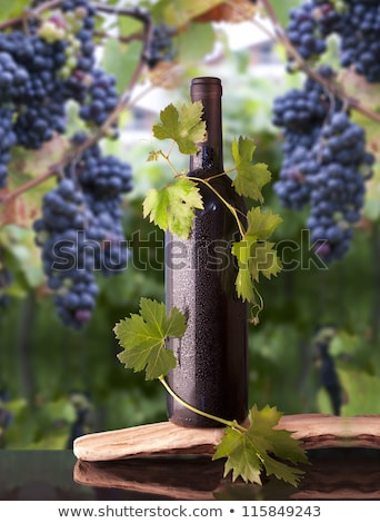Bottle of wine and grapes, grape leaves around it. Stock photo © justinb