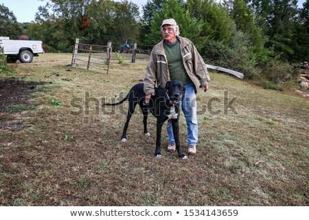 farmer his dogs stock photo © lisafx