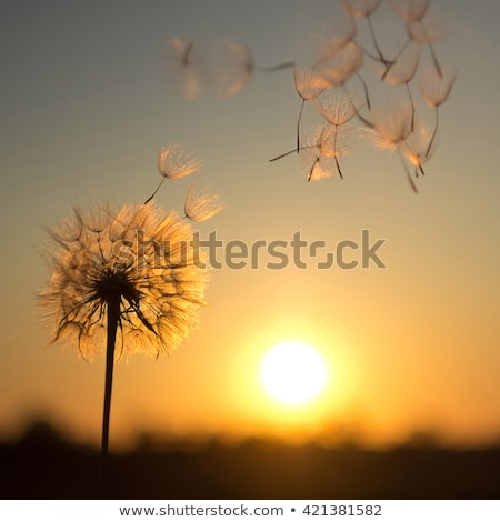 a sun setting concept illustraion Stock photo © experimental