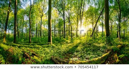 Groene bos mooie mistig voorjaar dag Stockfoto © Lizard