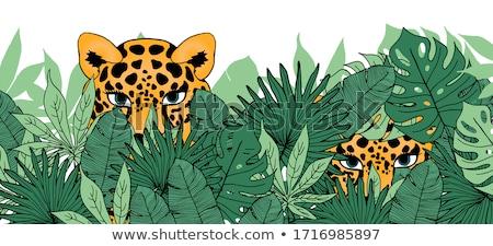 Foto stock: Ocultação · leopardo · forte · olhando · selva · sombras