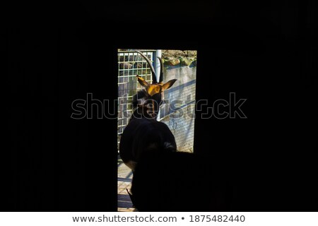 antelope in cage Stock photo © vizarch