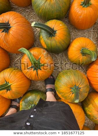 Halloween produire stand Californie fruits Photo stock © emattil