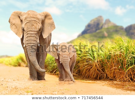 Stock fotó: Afrikai · bokor · elefánt · nyáj · elefántok · szavanna