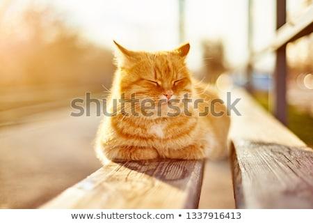 猫 · 外に · 穴 · ボックス · 頭 · 足 - ストックフォト © srnr
