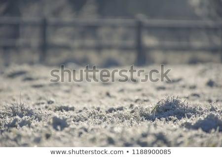 冬 冷ややかな 午前 公園 空 風景 ストックフォト © SergeyAndreevich