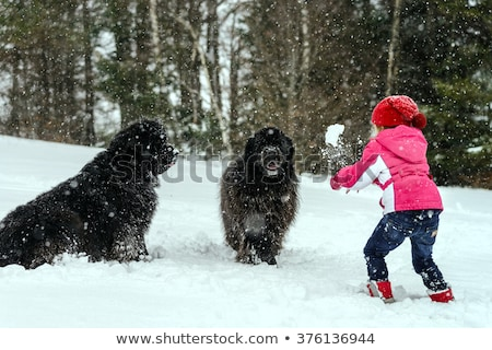 puppy newfoundland dog and child Stock photo © cynoclub