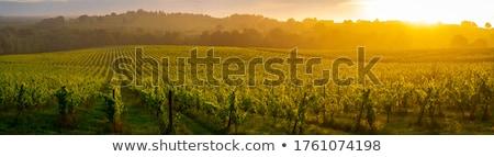 vineyards of saint emilion bordeaux vineyards stock photo © freeprod