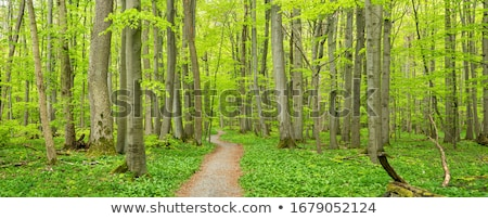 Stock photo: Footpath in the forest