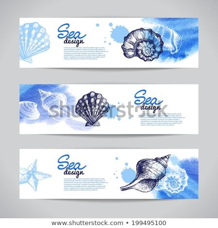 hand drawn doodle watercolor seashells and sea elements set stock photo © balasoiu