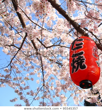 Japonais jardin kyoto Japon fleur eau Photo stock © daboost