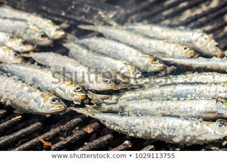 sardine for barbecue Stock photo © M-studio