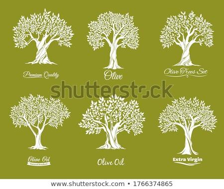 треснувший древесины дерево вектора логотип икона Сток-фото © blaskorizov