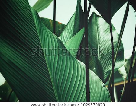 kokosnoot · bladeren · gesneden · voedsel · natuur · vruchten - stockfoto © dashapetrenko