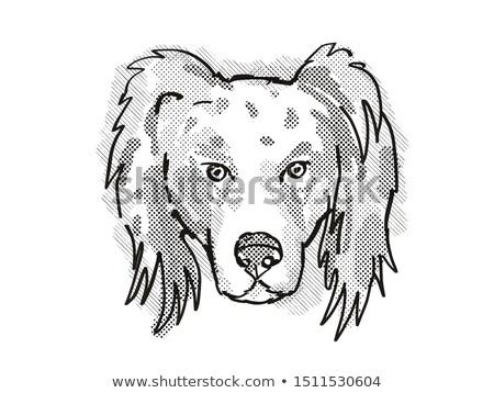 Australian Shepherd Dog Breed Cartoon Retro Drawing Stock photo © patrimonio