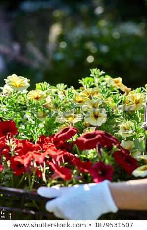 Florista manter caixa completo flores jardineiro Foto stock © Illia