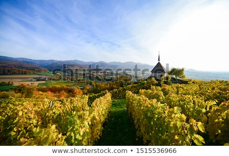 Wineyard and old Church Stock photo © tepic