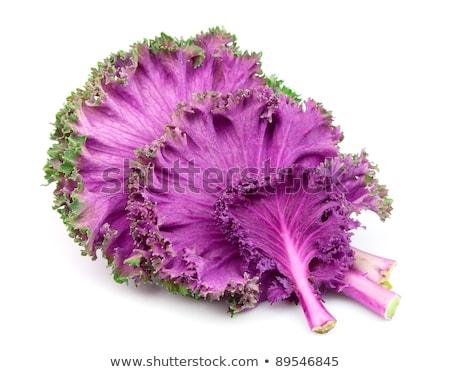 Red decorative cabbage Stock photo © Masha