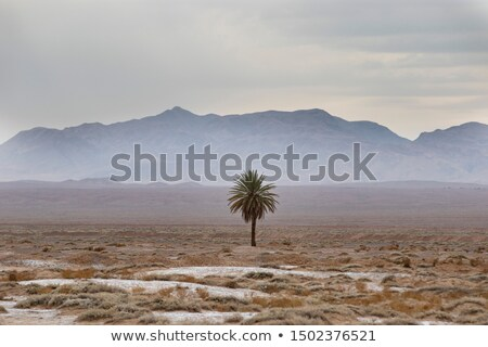 Lone Palms Stock photo © 33ft