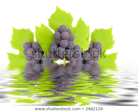 Bunch of green grapes reflected in rendered water Stock photo © Nejron