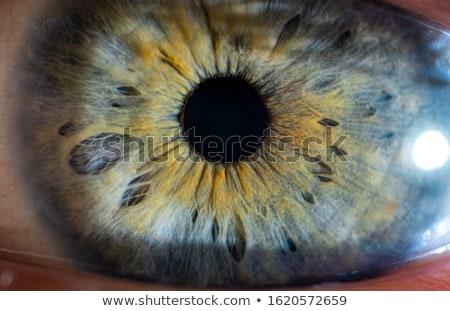 Stock photo: Human eyes macro