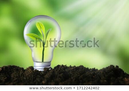 Groene energie groene boom groeiend uit lamp hand Stockfoto © rufous
