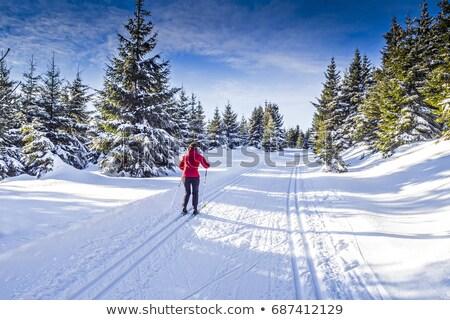 Manzara Almanya kış alanları ahşap doğa Stok fotoğraf © Arrxxx