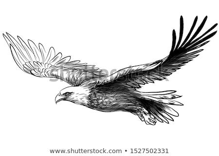 Portrait of a bald eagle. Drawn illustration Stock photo © Kirill_M