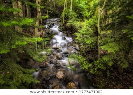 Wilderness Creek Stock photo © jeffmcgraw