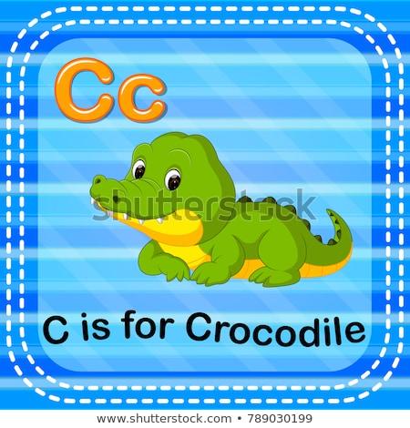 C betű krokodil illusztráció háttér oktatás kártya Stock fotó © bluering