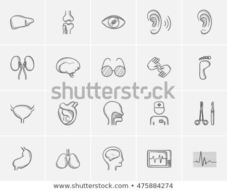 Urinary bladder sketch icon. Stock photo © RAStudio