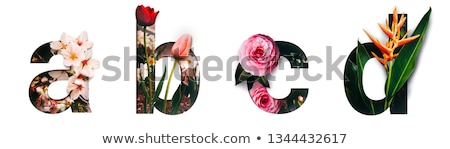 letter d and many words for it stock photo © bluering