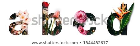 D betű sok szavak háttér művészet oktatás Stock fotó © bluering
