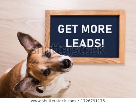 get more leads stock photo © ivelin