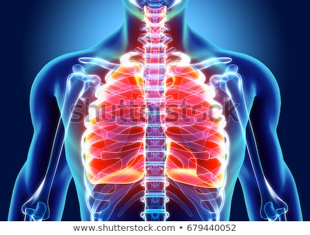 illustration of Lungs - Part Human Organic. Stock photo © tussik