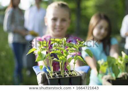 Pre-adolescent boy holding small plant Stock photo © IS2