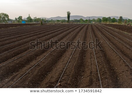 preparatory work for sowing crops cultivation of the soil by a tractor after harvesting in the summ stock photo © artjazz