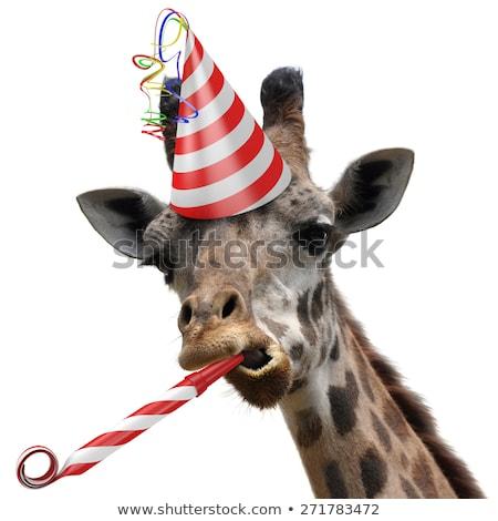 Zürafa parti örnek dizayn doğum günü arka plan Stok fotoğraf © bluering